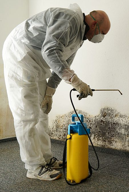 mold removal worker